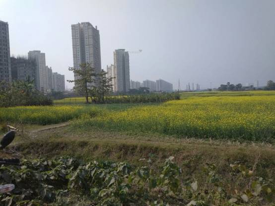 Biswajit Land Main Other