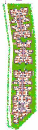 Daadys Olive Master Plan