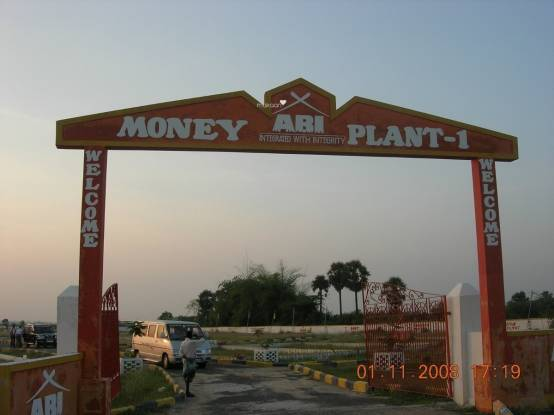 ABI Money Plant Main Other