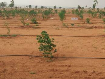 5445 sqft, Plot in Builder GREEN ACRES FARM LAND Jadcherla, Hyderabad at Rs. 10.8840 Lacs