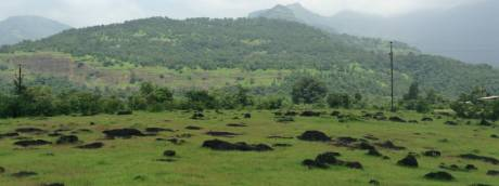 3000 sqft, Plot in Builder Kokan Trails Dapoli, Raigad at Rs. 4.5000 Lacs