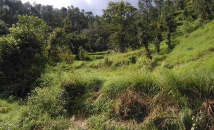 900 sqft, Plot in Builder Project Almora Mukteshwar, Nainital at Rs. 4.0000 Lacs