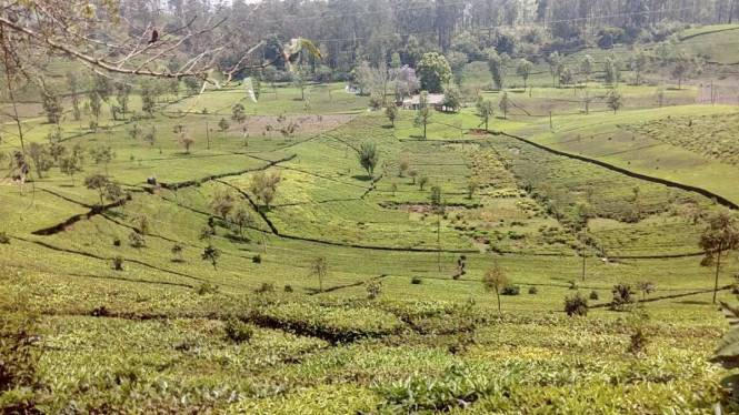 1200 sqft, Plot in Builder EGAM PROJECTS Coonoor, Ooty at Rs. 5.0000 Lacs