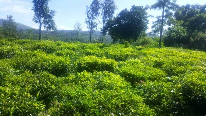 1200 sqft, Plot in Builder selas Coonoor, Ooty at Rs. 5.0000 Lacs