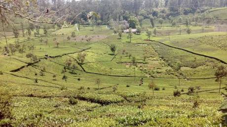 2180 sqft, Plot in Builder Project Ooty Main, Ooty at Rs. 10.0000 Lacs
