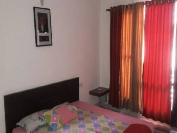 1345 sqft, 2 bhk Apartment in Corona Optus Sector 37C, Gurgaon at Rs. 16000