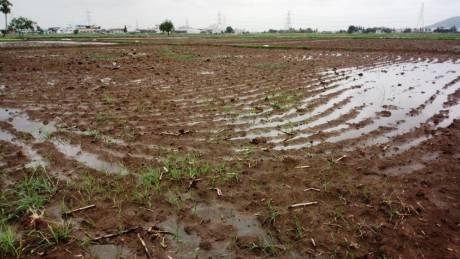 14157 sqft, Plot in Builder venkateswara rao Nunna, Vijayawada at Rs. 2.0449 Cr