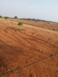 1089 sqft, Plot in Builder Golden Mango Gardens Kadthal, Hyderabad at Rs. 2.7818 Lacs