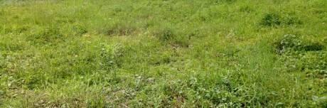2722 sqft, Plot in Builder Project Thykoodam, Kochi at Rs. 93.7500 Lacs