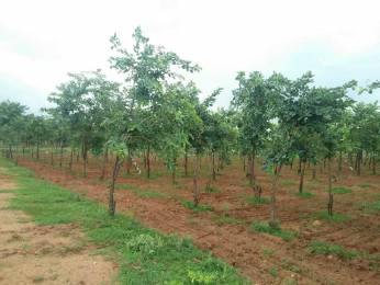 1056 sqft, Plot in Builder Project Timmapur, Hyderabad at Rs. 15.0000 Lacs