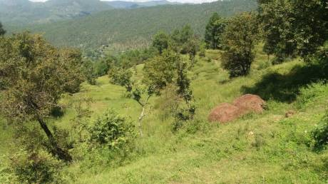 2160 sqft, Plot in Builder Project Mukteshwar Road, Almora at Rs. 4.0000 Lacs