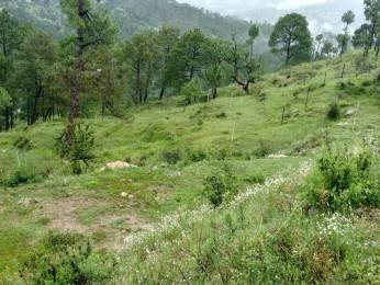 2160 sqft, Plot in Builder Project Mukteshwar, Nainital at Rs. 5.0000 Lacs