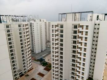 800 sqft, 2 bhk Apartment in TATA New Haven Nelamangala Town, Bangalore at Rs. 11000