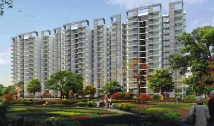 546 sqft, 1 bhk Apartment in Signature Grand Iva Sector 103, Gurgaon at Rs. 13.5000 Lacs