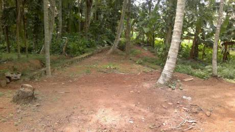 3492 sqft, Plot in Builder poonkula Agricultural College Road, Trivandrum at Rs. 40.0000 Lacs