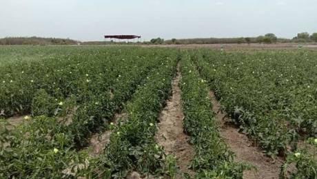 10000 sqft, Plot in Builder kingmakers farm land Melmaruvathur, Chennai at Rs. 10.0000 Lacs