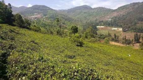 1308 sqft, Plot in Builder Green hill gated community Ooty Thummanatty Kappachi Road, Ooty at Rs. 5.0000 Lacs