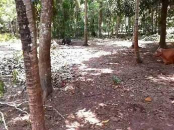 828 sqft, Plot in Builder Project Karunagappally Kottarakkara Road, Kollam at Rs. 2.5000 Lacs