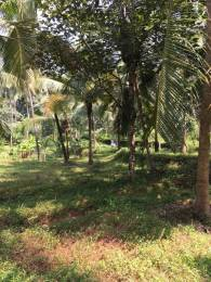 17422 sqft, Plot in Builder Project Narikkuni Koduvally Road, Kozhikode at Rs. 72.0000 Lacs