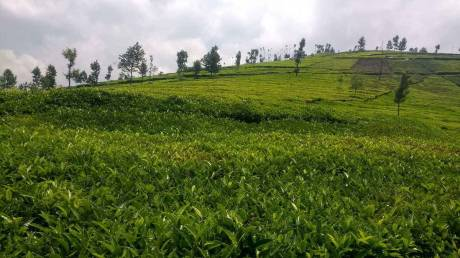 3662 sqft, Plot in Builder Holiday home property Kenthorai, Ooty at Rs. 16.0000 Lacs