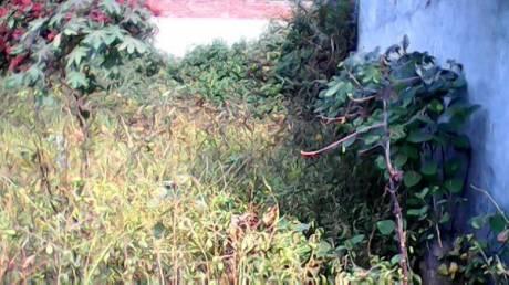 13923 sqft, Plot in Builder Project Jalandhar Bypass Road, Jalandhar at Rs. 1.1000 Cr