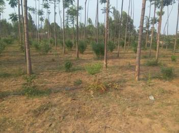 2700 sqft, Plot in Builder Project Ravikamatham Road, Visakhapatnam at Rs. 3.6000 Lacs