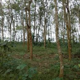 13068 sqft, Plot in Builder Project Manthanam Kunnamthanam Road, Pathanamthitta at Rs. 1.1250 Cr