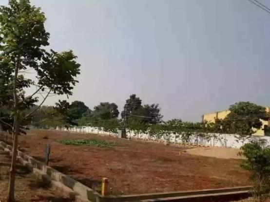 1629 sqft, Plot in Builder Project Kakinada Road, Kakinada at Rs. 9.9000 Lacs