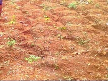10882 sqft, Plot in Builder Project Pampady Kooroppada Road, Kottayam at Rs. 40.0000 Lacs