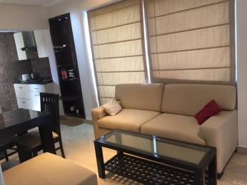 1150 sqft, 1 bhk Apartment in Builder Project Hauz Khas, Delhi at Rs. 50000