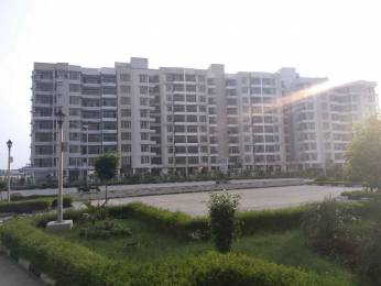 1160 sqft, 2 bhk Apartment in TDI Wellington Heights Sector 117 Mohali, Mohali at Rs. 42.0000 Lacs