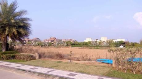 1125 sqft, Plot in Omaxe Phase 3 Mullanpur Mullanpur, Mohali at Rs. 95.0000 Lacs