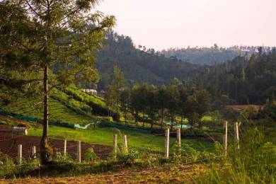 6533 sqft, Plot in Builder RESIDENTIAL PLOTS ketti pallada, Ooty at Rs. 38.2500 Lacs