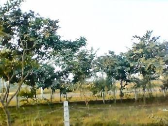 1291 sqft, 3 bhk Villa in Builder gnida XU 1, Greater Noida at Rs. 49.0000 Lacs