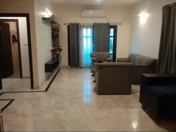 2500 sqft, 3 bhk Apartment in Builder Project Coles Road, Bangalore at Rs. 80000