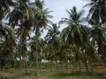 5000 sqft, Plot in Jemi Holiday Resort Natham, Madurai at Rs. 5.0000 Lacs