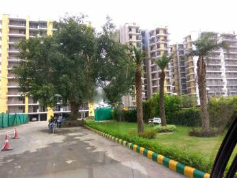 1673 sqft, 3 bhk Apartment in Trishla City Bhabat, Zirakpur at Rs. 53.6500 Lacs