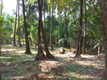 18000 sqft, Plot in Builder Project Nagaon, Alibaugh at Rs. 1.2500 Cr
