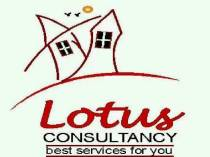 lotus consultancy