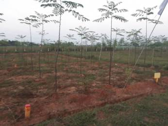 1080 sqft, Plot in Builder SS Developers Farm Lands Rajahmundry, East Godavari at Rs. 5.0400 Lacs