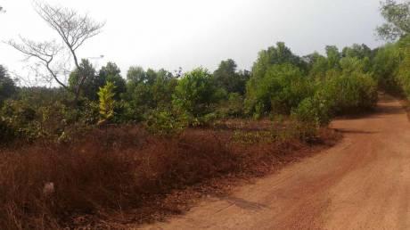13500 sqft, Plot in Builder kunjathur Manjeshwar Subrahmanya Road, Kasaragod at Rs. 40.0000 Lacs