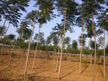 6480 sqft, Plot in Builder Project Pocharam Near Muthangi, Hyderabad at Rs. 25.2000 Lacs
