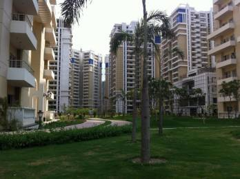 1950 sqft, 3 bhk Apartment in Purvanchal Royal Park Sector 137, Noida at Rs. 1.1500 Cr