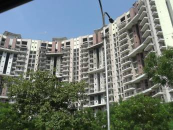 1172 sqft, 2 bhk Apartment in Amrapali Pan Oasis Sector 70, Noida at Rs. 55.6700 Lacs