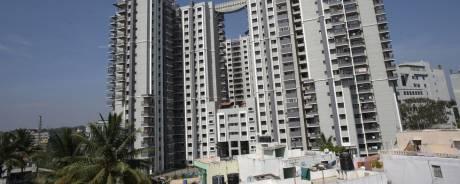 1712 sqft, 3 bhk Apartment in Sobha Magnolia BTM Layout, Bangalore at Rs. 40000