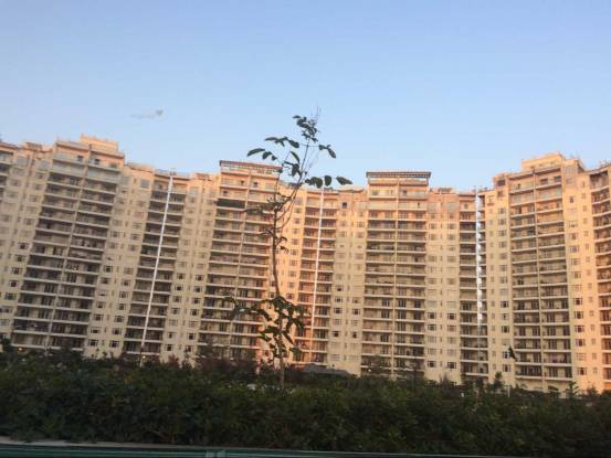 1200 sqft, 2 bhk Apartment in  Central Park 2 Townhouse Atta, Gurgaon at Rs. 43000