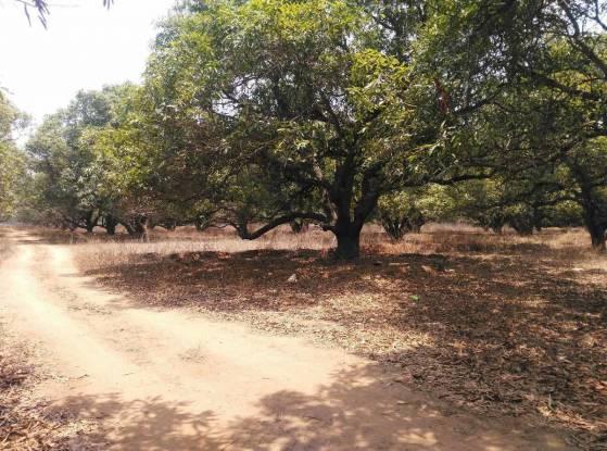 999 sqft, Plot in Builder gollanapalle gardens Gannavaram, Vijayawada at Rs. 3.8850 Lacs