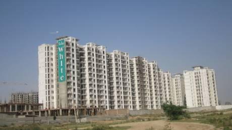 1326 sqft, 3 bhk Apartment in Tulip Tulip White Sector 69, Gurgaon at Rs. 87.0000 Lacs