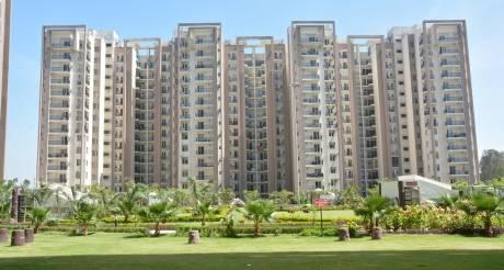 1460 sqft, 3 bhk Apartment in Motia Royal Citi Apartments Gazipur, Zirakpur at Rs. 25000