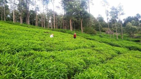 1308 sqft, Plot in Builder Residential plot sale in Ooyy Ooty Thummanatty Kappachi Road, Ooty at Rs. 5.0000 Lacs